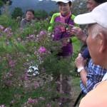 山頂はハギ、ツルリンドウ、アザミ、ワレモコウ、開花前のセンブリなどが目を楽しませてくれました