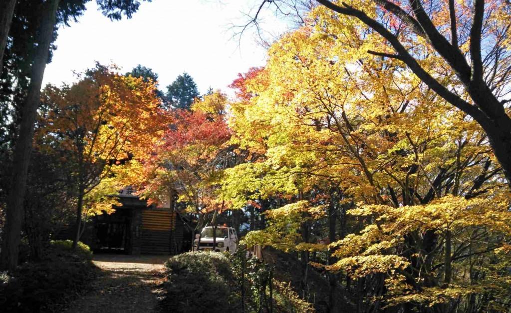 11月15日、日の出山山頂直下の東雲山荘は紅葉の真っ盛りでした。