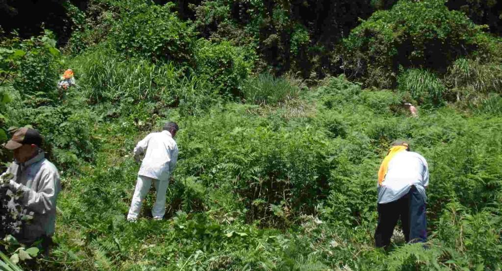 現在立ち入り禁止の勝峰高原は、山菜や草花の群生地です。