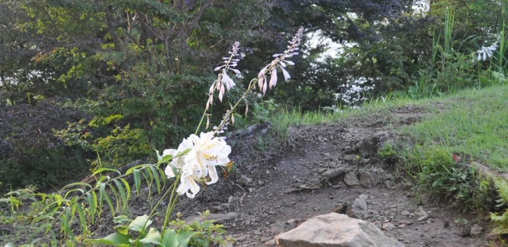 山頂にもヤマユリやオオバノギボウシがたくさん咲いていて、単独登山を楽しませてくれました。