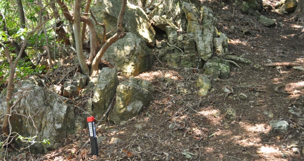 標高700m地点に来るとね一般登山道の金毘羅尾根への分岐が近い。