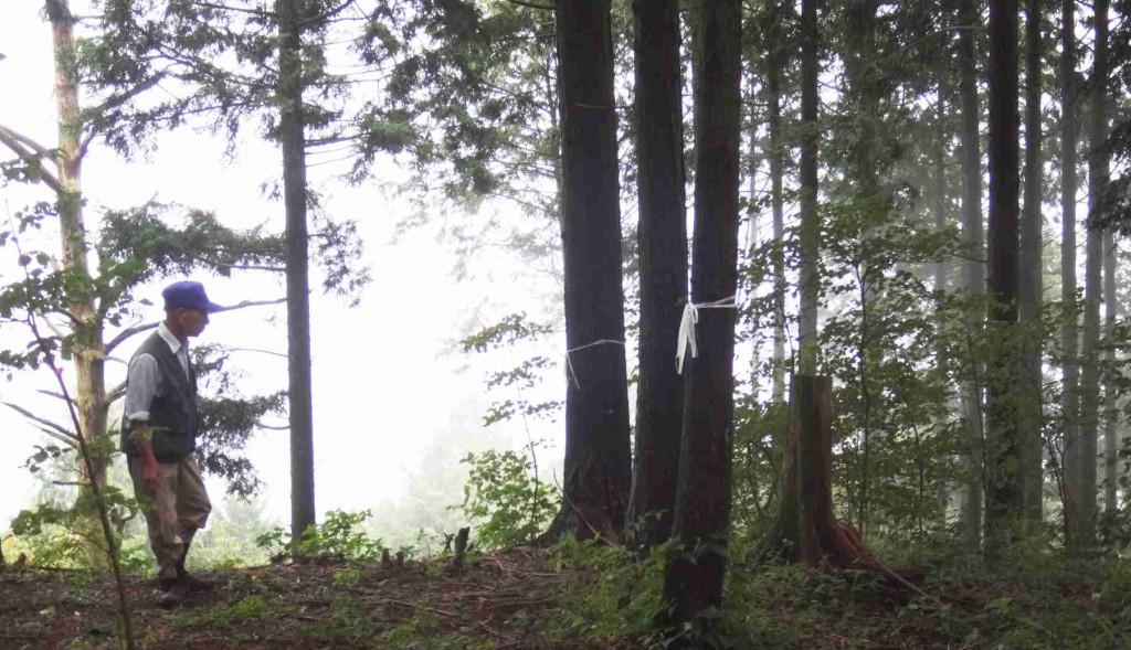 伐採する樹木や境界には、すでに目印のテープが巻かれている。