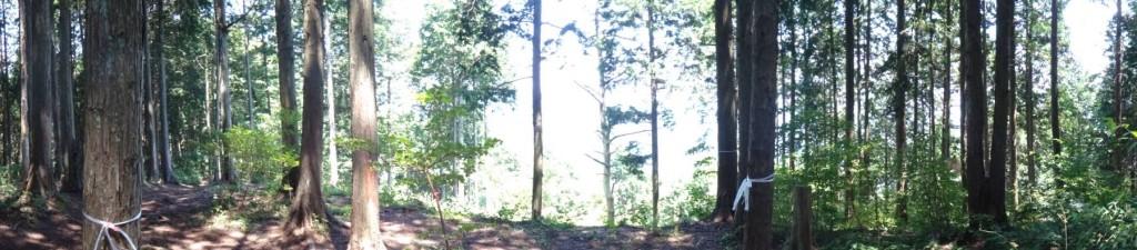 現在の山頂は、針葉樹林に囲まれ、北西のごく一部を除いて見晴らしがきかない。(パノラマ写真180度)