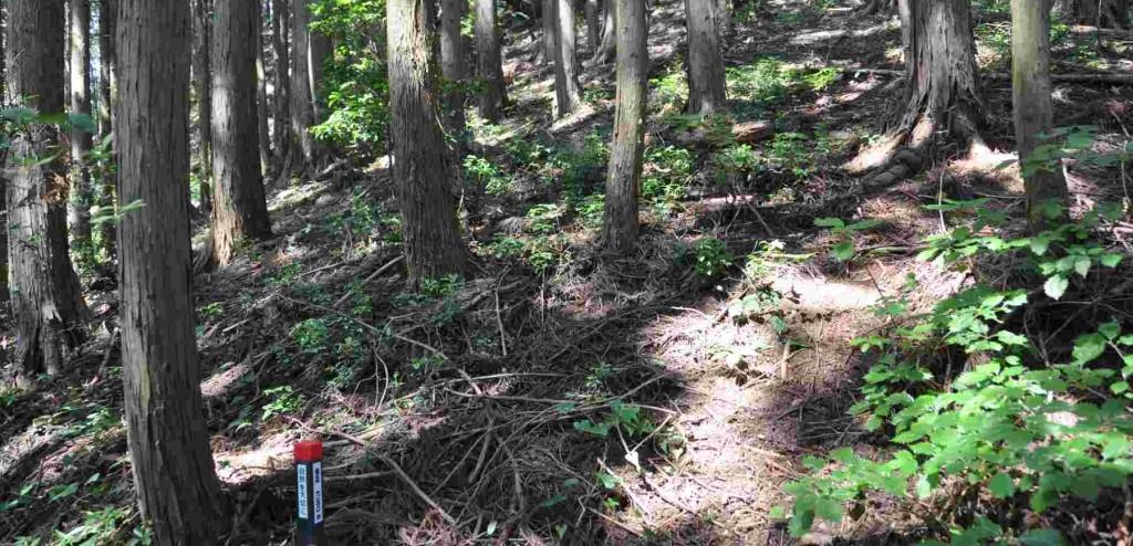 標高650m近辺は幅の広い尾根筋だ。踏み跡を外さぬよう慎重に進む。
