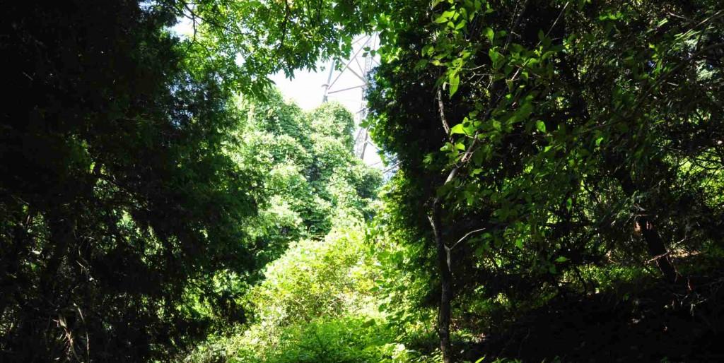藪状の中の踏み跡をたどると藪の隙間から鉄塔が見える。鉄塔へ向かって踏み跡を選び進む。