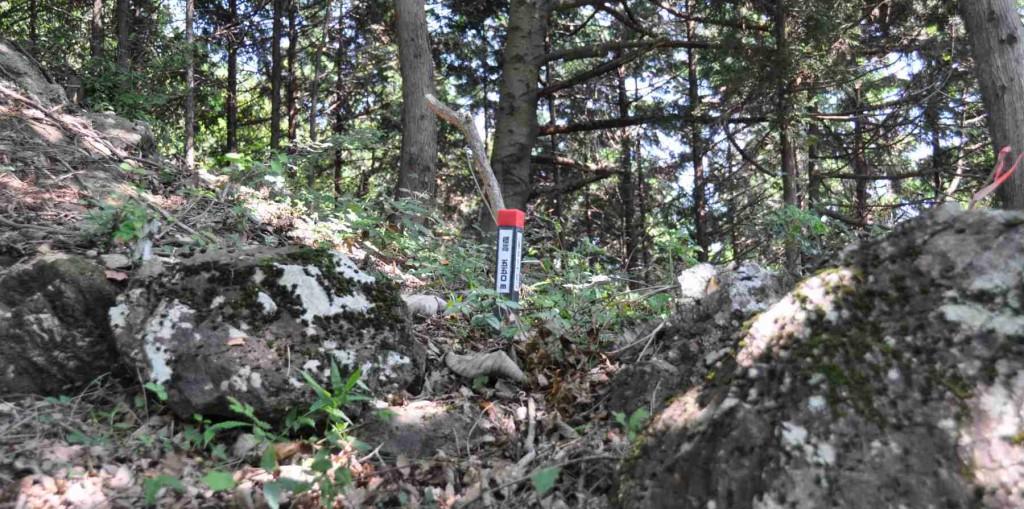 尾根に出る手前に標高550mの標識がある。梯子の下が標高500mだからかなりの急登だ。