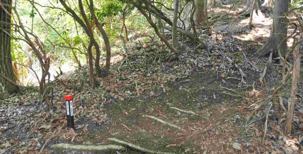金毘羅尾根への分岐からしばらく上ると、75mの標識に出る。この辺りは登山者も多く、踏み跡はしっかりしている。