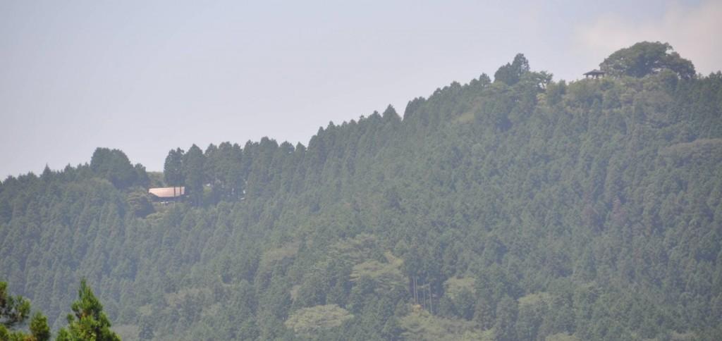 麻生山からの下りは、日の出山山頂(右)や東雲山荘(左の樹間)が見える麻生平に下り、タルクボ沢添いにタルクボ林道へと戻りました。