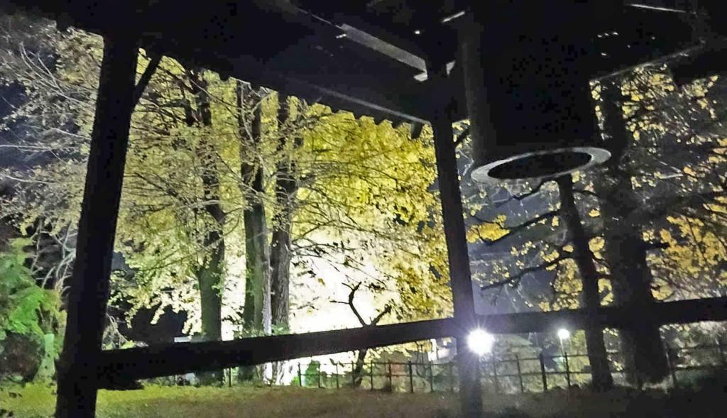 大銀杏の黄葉を透過してくる、柔らかな光に梵鐘のシルエットが浮き上がり、静寂の中にかすかな鐘の音が聞こえるようです。
