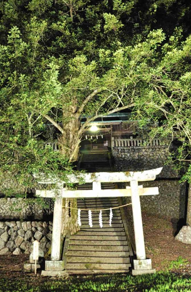 これも肝要地区に有る一の護王神社。見事な石積みの石垣と巨樹が圧倒的で、カエデなど紅葉もきれいです。