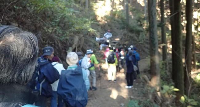 日の出山まではアップダウンの少ない楽なコースで、森林インストラクターの植物や虫の説明を聞きながら進みます。