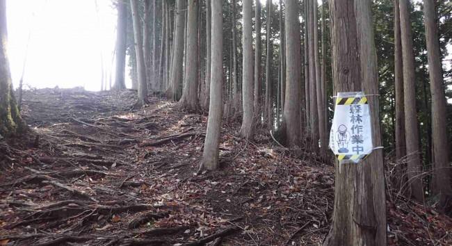 山頂近くの尾根へ出ると、伐採作業中の看板が貼ってあった。