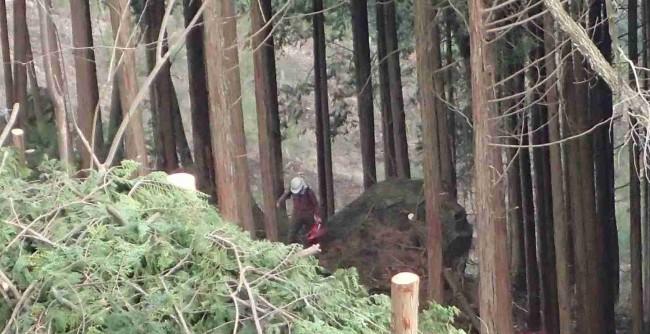 南側の樹木は全てを切る皆伐ではなく、間引きする間伐が進んでいた。