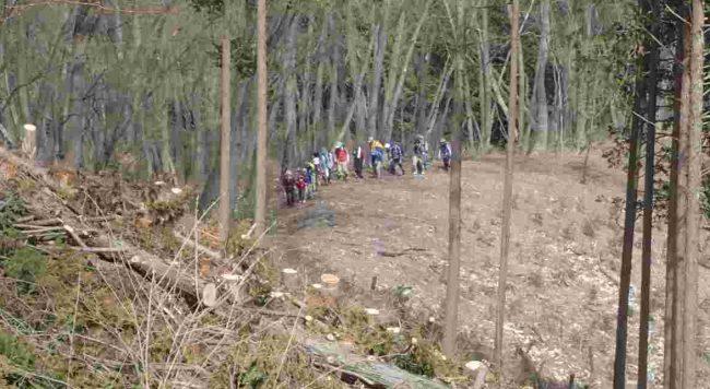 新麻生平から伐採された斜面を急登すると、麻生山への近道になります。