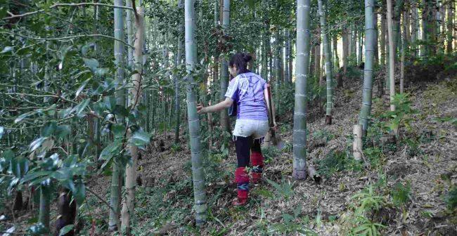 竹林は古い順に伐採いされ、10年未満の元気な若竹に管理されているので、落ち葉だけの養分で育つ超自然で、竹の子も柔らかくてあくが無いのが特長だ。