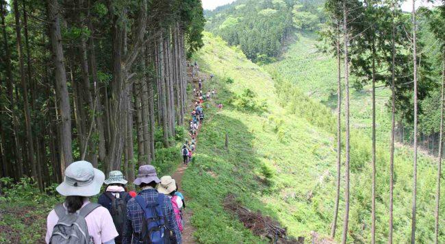 麻生山から日の出山までのコースは尾根歩きで、伐採された明るい尾根や静かな林の中の会と来な尾根道を日の出山を目指す。