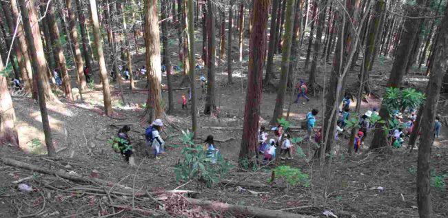 下山は植林された尾根道の、あご掛け岩コースを下る。