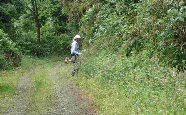 林道部分も車のわだち部分以外はすぐに草で覆われるので、雑草の成長と追いかけっこだ。
